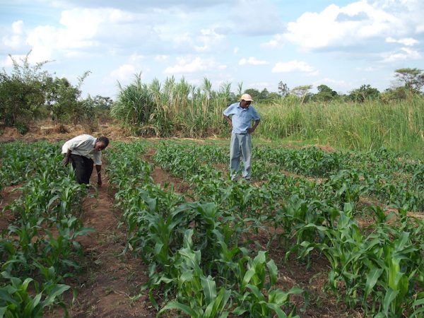 Improving Agricultural Productivity and Sustainability