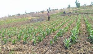 farmers Agust 2020